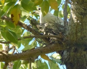 First PIP nest of the season for Townsville