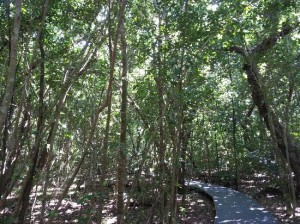 green-island_rainforest_ boardwalk_tripadvisor